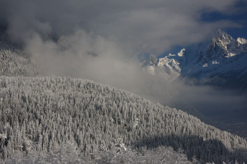 Snow-covered trees and the Aiguille Vert behind