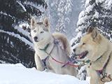 photo from huskydalen.com